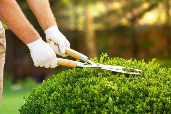 ABF-azienda-bergamasca-formazione-treviglio-manutentore-verde